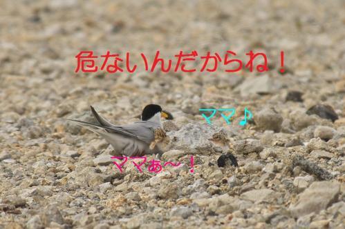 100_20130628214859.jpg