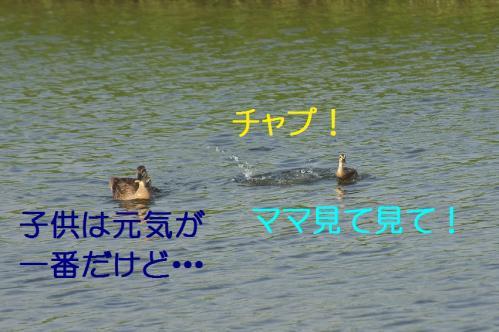 100_201308010202309b7.jpg