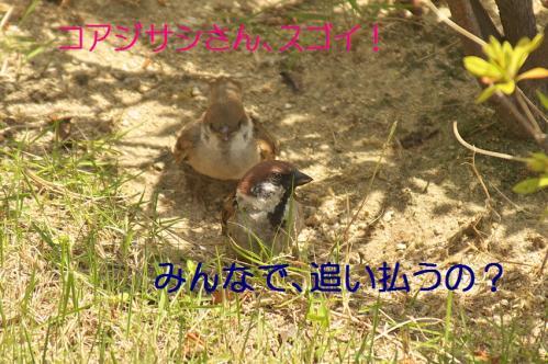105_20130617213646.jpg