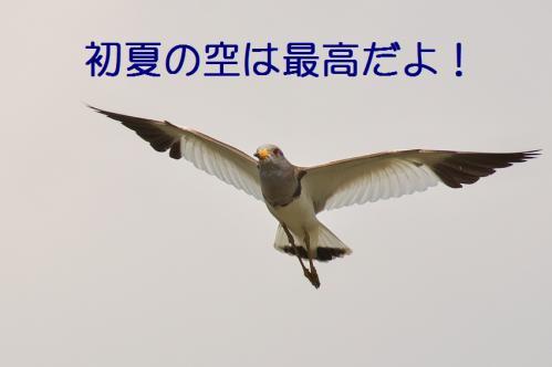 120_20130531214321.jpg
