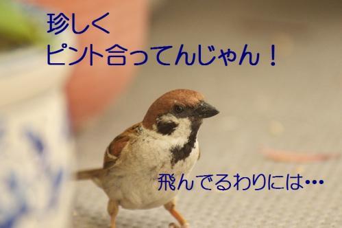 130_20130531214326.jpg