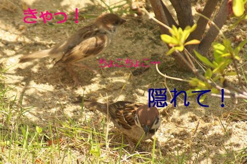 130_20130617213743.jpg