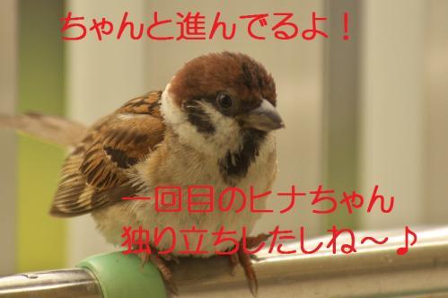 130_20130630200418.jpg