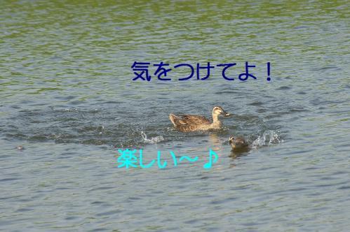 130_20130801020319d24.jpg