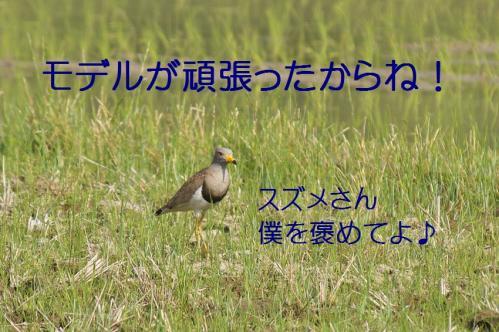 140_20130531214330.jpg