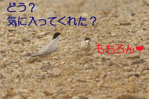 140_20130616232145.jpg
