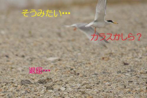 140_20130628214945.jpg