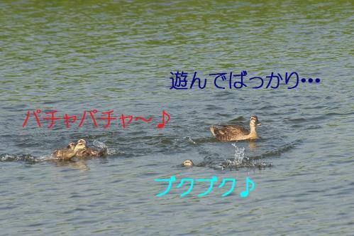 140_20130801020323d6e.jpg