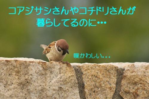 153_20130617213759.jpg