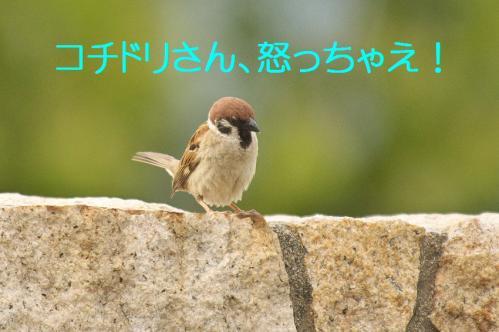 155_20130617213848.jpg