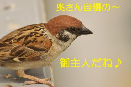 170_20130616224950.jpg