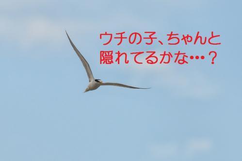 175_20130628215201.jpg