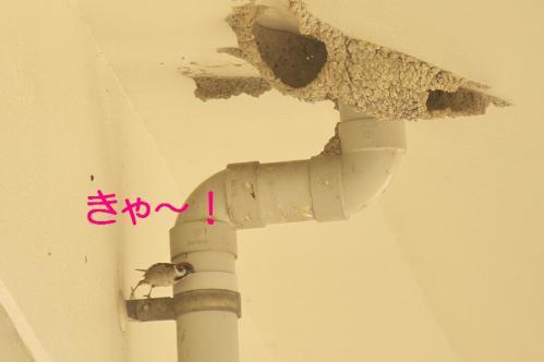 180_20130531214417.jpg
