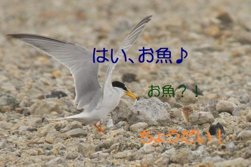 200_20130628215213.jpg