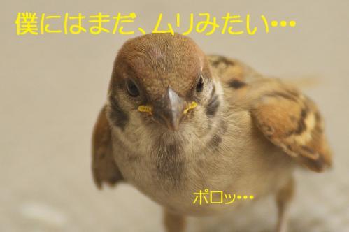 200_20130801020429529.jpg