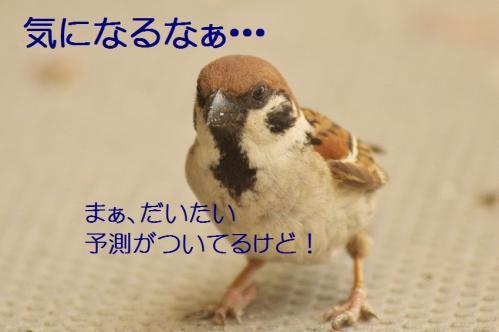 220_20130531214538.jpg