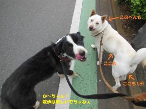 201306めぐ&リキ