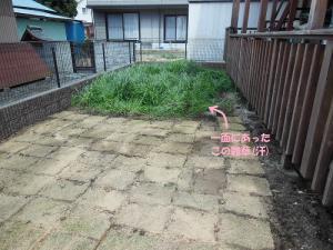 20130406-雑草