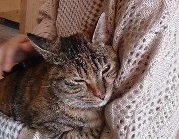 猫カフェ (4)