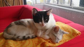猫カフェ (7)
