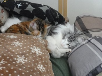 寝てる猫達 (1)