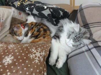 寝てる猫達 (2)