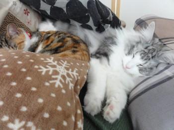寝てる猫達 (3)