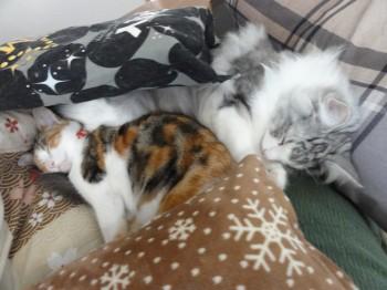 寝てる猫達 (4)