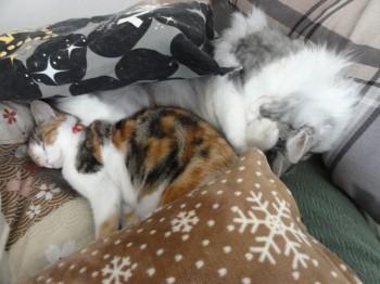 寝てる猫達