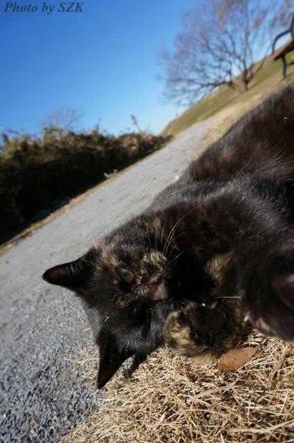 江戸川のサビ猫_03
