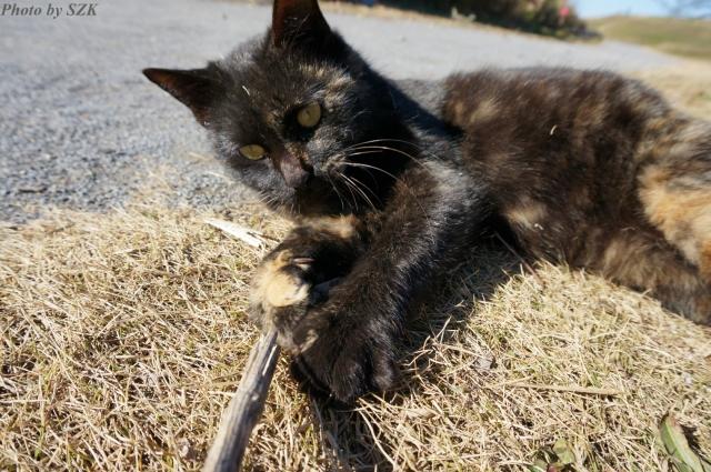 江戸川のサビ猫_04