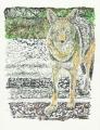 coyote122.jpg