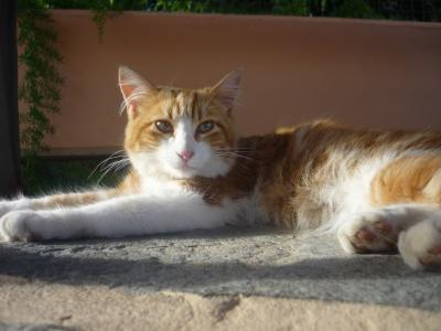 chat canaria3