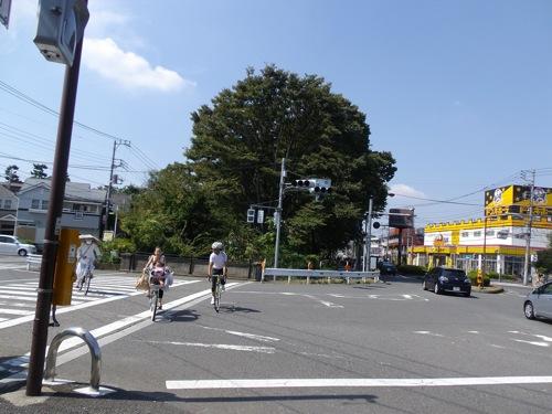 IMGP4493.jpg