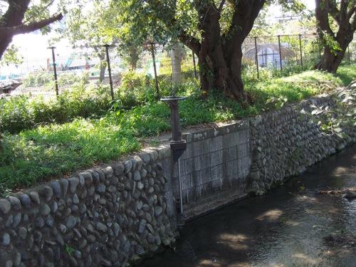IMGP4518.jpg