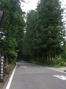 例幣使街道杉並木