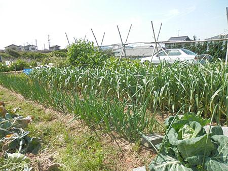 u-yasai-15.jpg
