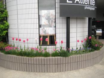 2013年花壇