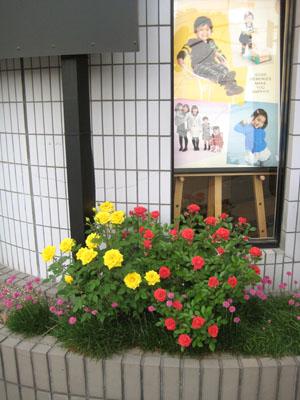 2013年のバラ
