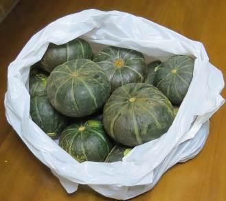 栗カボチャ収穫物10月