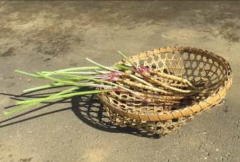 白茎ゴボウ収穫物11月