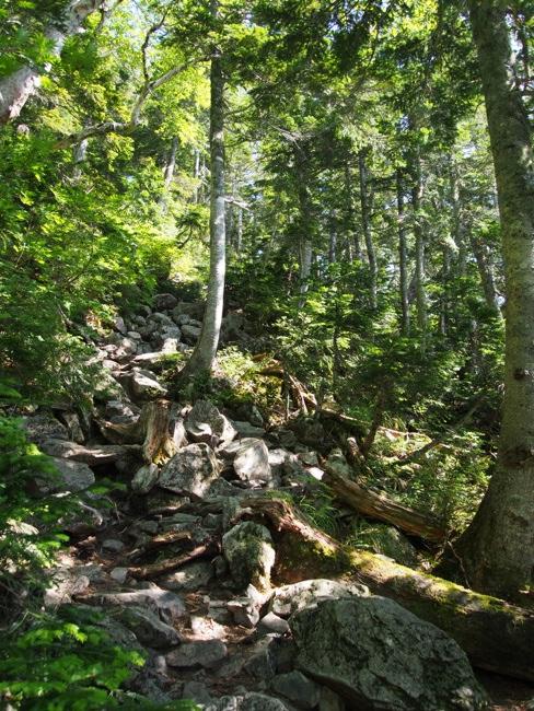 針葉樹林帯のゴーロ
