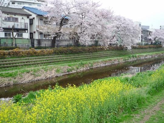 ryounan13_03-11.jpg