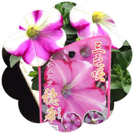 image_20130329202953.jpg