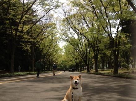 green2013-3.jpg