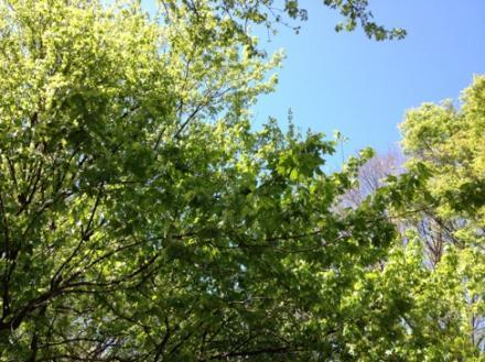 green2013.jpg
