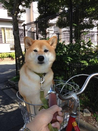rakuchin-dog.jpg