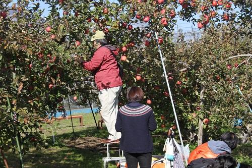 13リンゴ狩り4