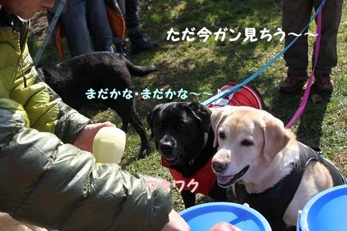 13リンゴ狩り8