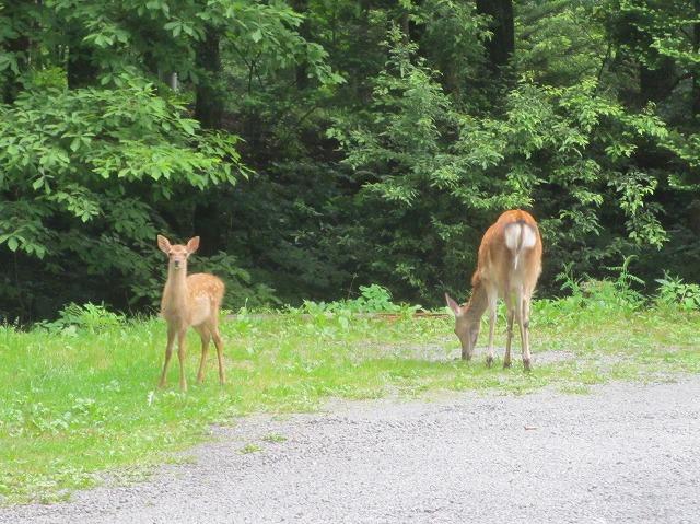 20130705鹿の親子 (3)